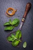 Fresh mint and vintage knife for chopping — Stock fotografie
