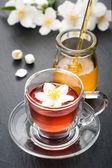 Herbal tea with jasmine flowers and honey — Stock Photo