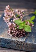 Marjoram Origanum vulgare and mint. Herbs. — Stock Photo