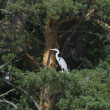 Heron sitting on a tree branch - Zdjcie stockowe