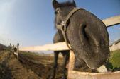 Curious horse nose — Stock Photo
