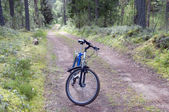 Biking in the forest — Stock Photo