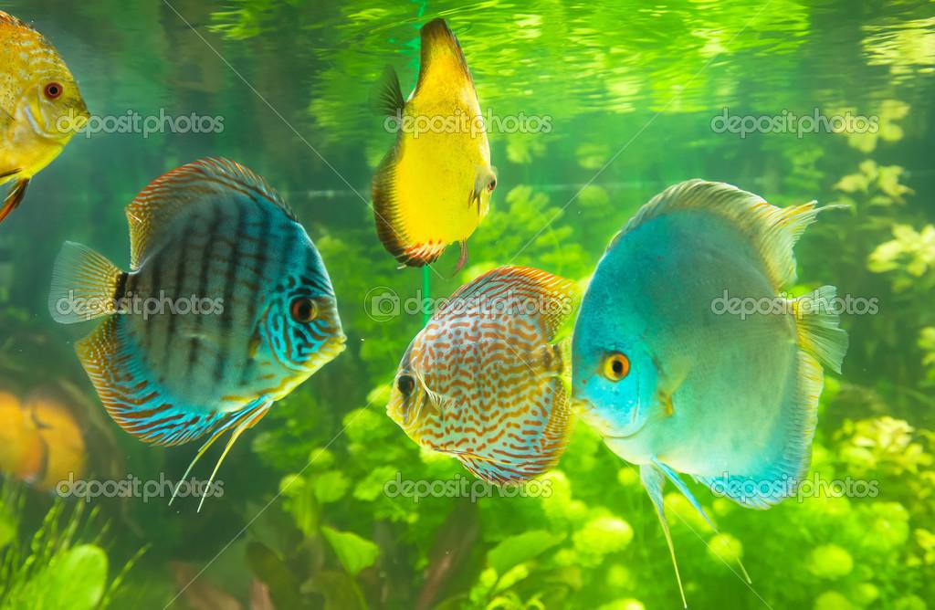 Kostya6969 23948957 for Tipos de jaulas para peces