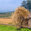 Stock Photo: Rural landscape with golden ears
