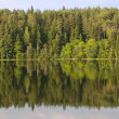 Reflections on the Coniferous Forest on a Wilderness Lake — Stock Photo