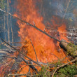 Fire in the forest — Stock Photo #31645795