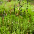 Bright green moss macro shot — Stock Photo