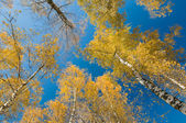 Autumn forest and blue sky — Stock Photo
