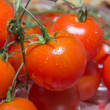 Photo of very fresh Cherry tomatoes on branch — Stock Photo