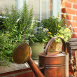 Flowers and herbs on window ledge - Stock Photo