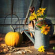 Garden shed with tools, pumpkin and flowers — Stok fotoğraf