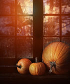 Different sized pumpkins in window — 图库照片