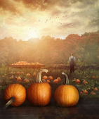 Pumpkins on table in farmer — ストック写真