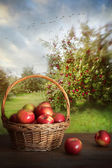 Basket of apples on table in orchard — Stock Photo
