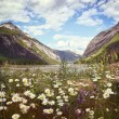 Field of wild flowers with Rocky Mountains in background - Stock Photo