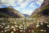 Field of wild flowers with Rocky Mountains in background — Stock Photo