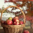 Basket of freshly picked apples on table — Stock Photo #29702553