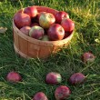 Stock Photo: Basket of apples in the grass