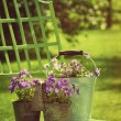 Spring violets in pots on garden chair — Stock Photo