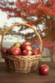 Basket of freshly picked apples on table — Stock Photo