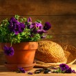 Pruning purple pansies — Stock Photo #3389906