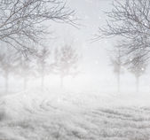 Snowy winter background — Stock Photo