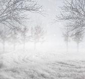 Snowy winter background — Stock Photo