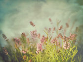 Lavender flowers with vintage color filters — Stock Photo