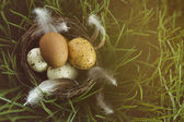 Nest with speckled eggs in the grass — Stock Photo