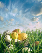 Bird nest with speckled eggs in the grass — Stock Photo