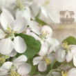 Stock Photo: Apple blossoms with house in background