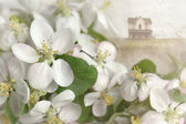 Apple blossoms with house in background — Stock Photo