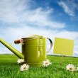 Watering can with daisies — Stock Photo