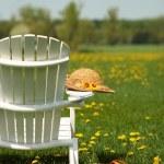 Adirondack chair — Stock Photo #48704365