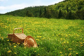 Picnic basket in the grass — Stock Photo