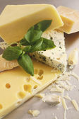 Various types of cheese on stainless  — 图库照片