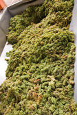 Processing of white grapes for wine — Stock Photo
