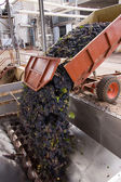 Red grapes on wine production — Stock Photo