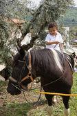Häst och kid — Stockfoto
