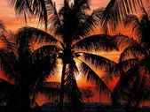 Zonsondergang met palm. — Stockfoto