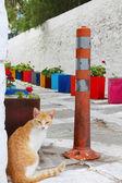 Cat on small street. — Stock Photo
