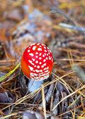 Cogumelo envenenado — Fotografia Stock