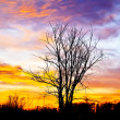 Royalty-Free Stock Photo: Tree with a beautiful sunset