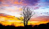 Tree with a beautiful sunset — Stock Photo
