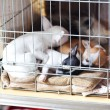 Toy terrier puppies sleeping in a cage — Stock Photo
