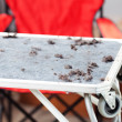 Grooming table with dogs fur — Stockfoto
