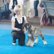 SAMARA,RUSSIA-AUGUST 26:Russian national dogs exhibition of all — Stock Photo