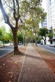 Beautiful avenue of plane trees — 图库照片