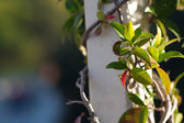 Green gazebo in the rose garden — Stock Photo