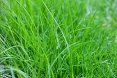 фоне пышной зеленой травы — Стоковое фото